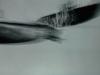 Kunstvermittlung Klement, Frank Baquet, Deep See Nr. 6, 40x60cm