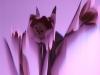 Petra Kretzschmar: Rosa Tulpen 2