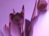 Petra Kretzschmar: Rosa Tulpen 3